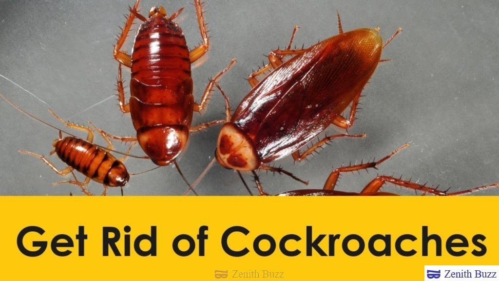 method to prevent cockroaches naturally