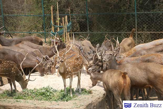 Vandalur Zoo is a perfect place to visit during summer in Chennai